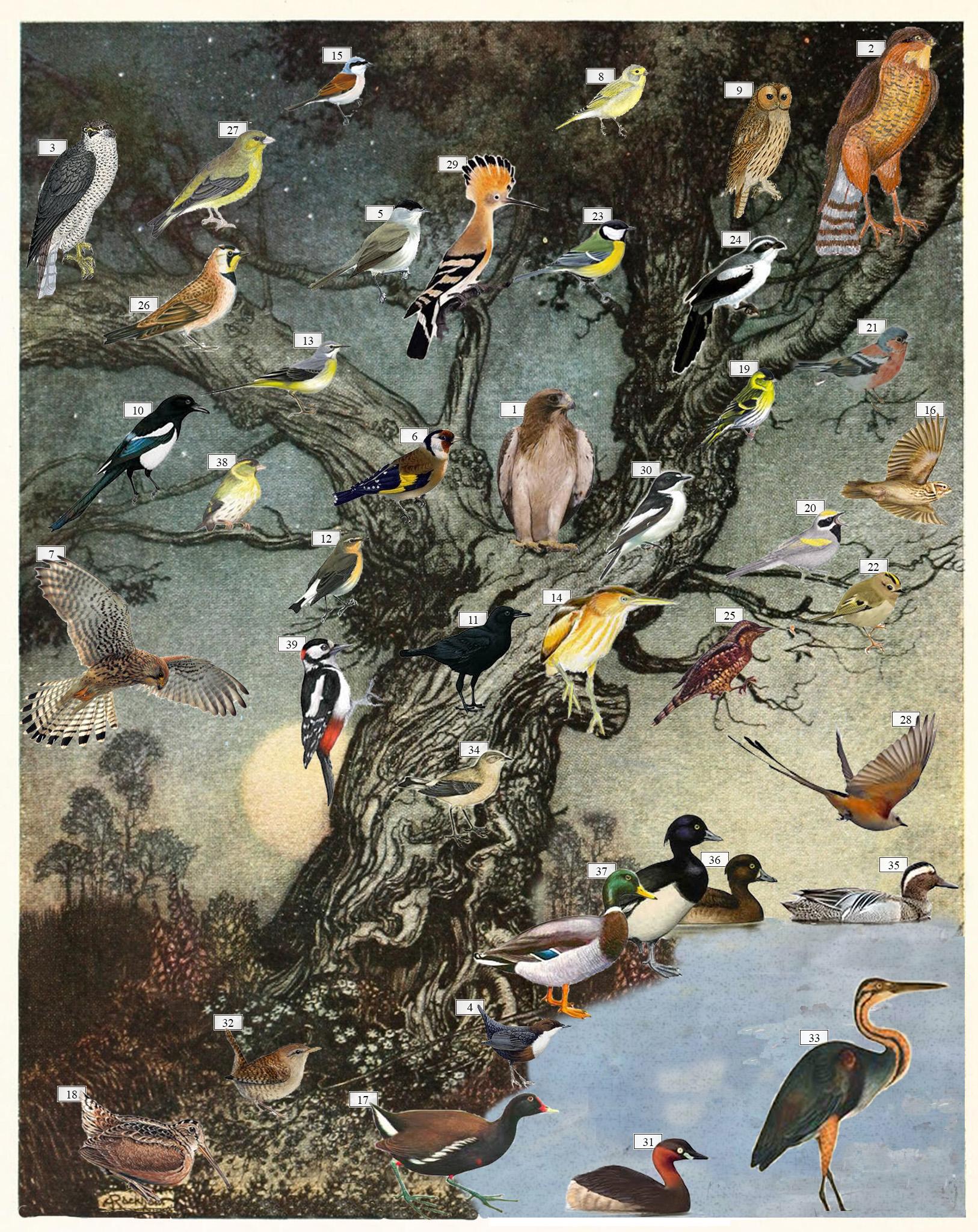 I predatori e i compagni dei sette piccioncini